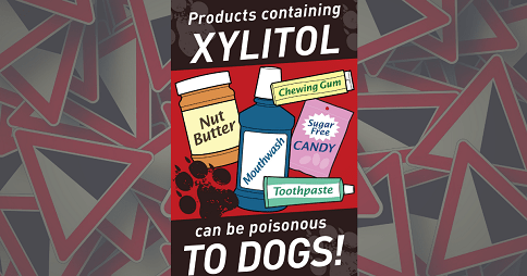 Is Xylitol Bad for Dogs