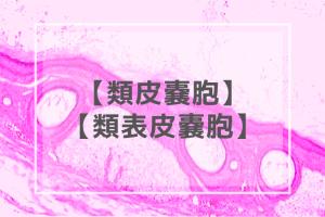 【歯科医師国家試験】類皮嚢胞・類表皮嚢胞