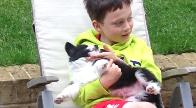 dogs and children training