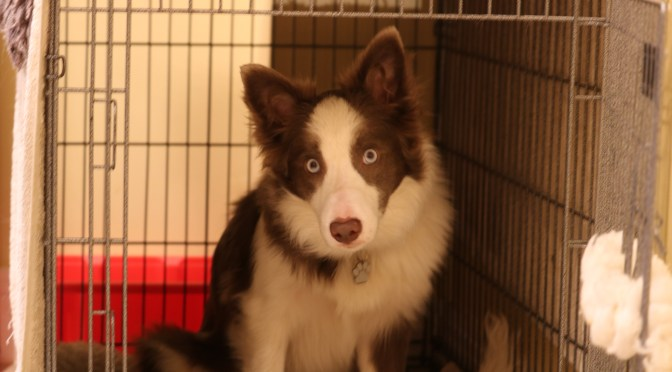 Crates, Cages and Kennels – What's the point?
