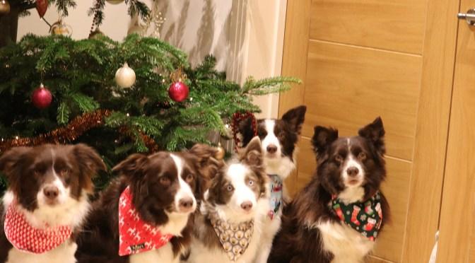 Christmas Bandanas!