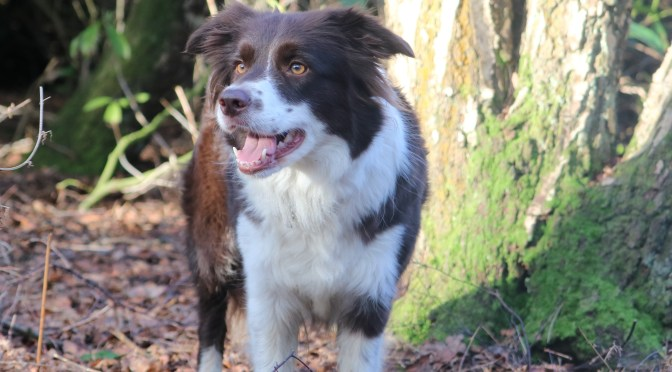 Ticks and Fleas – prevention or cure?