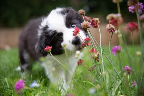 find a puppy choose a dog