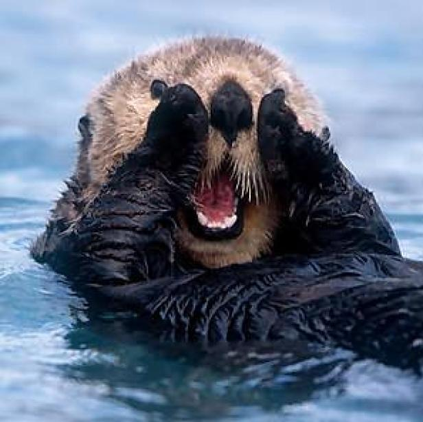 oh-my-otter