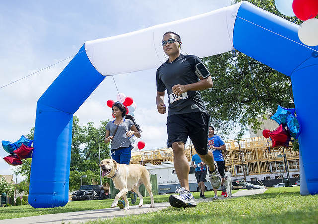 Two runners and a dog cross the home stretch during the June 27 Miles for Smiles Runathon.