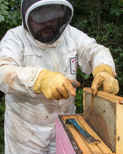 Dr. Lee Kavanagh checks the frames of the bee hives at his College Station, Texas, home.