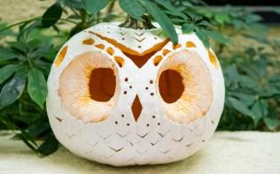 Owl - carved pumpkin