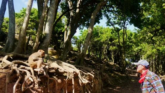 Dr. Qian Wang studies rhesus monkeys.