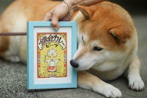 鎌倉坂の下三留商店看板犬クウ