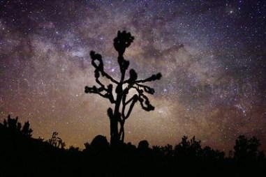 Mojave National Preserve Star Party November 5, 2016