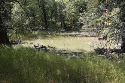 Santa Ana River Trail Medow