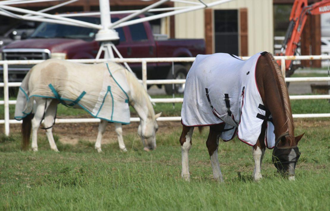 covered horses.jpg thumbnail