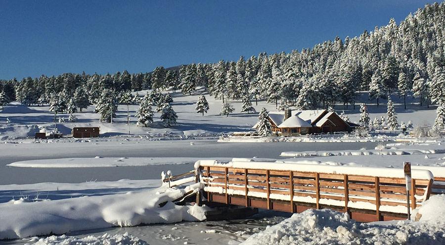 Evergreen Co in Winter