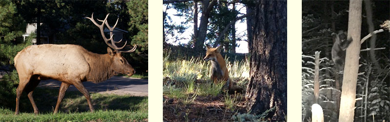 Evergreen Colorado Wildlife