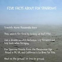 fOX SPARROW FACTS