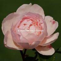 Vara la Kew Gardens