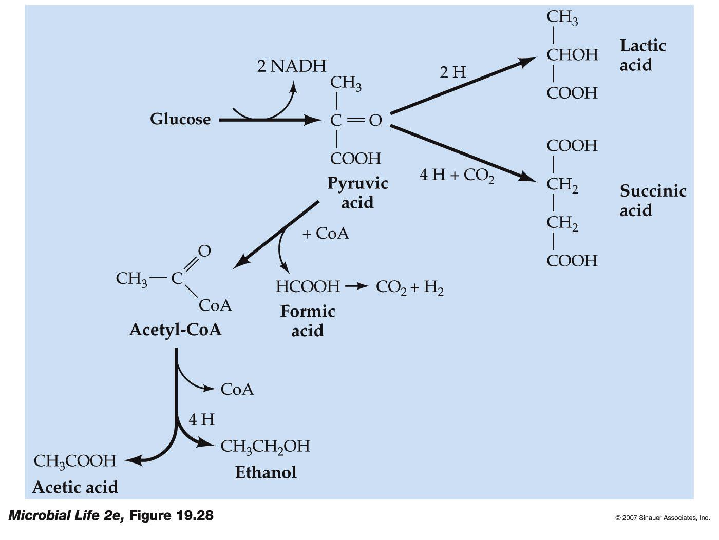 pourbaix diagram nickel honda 125 motorcycle wiring sodium hydroxide phase silicate