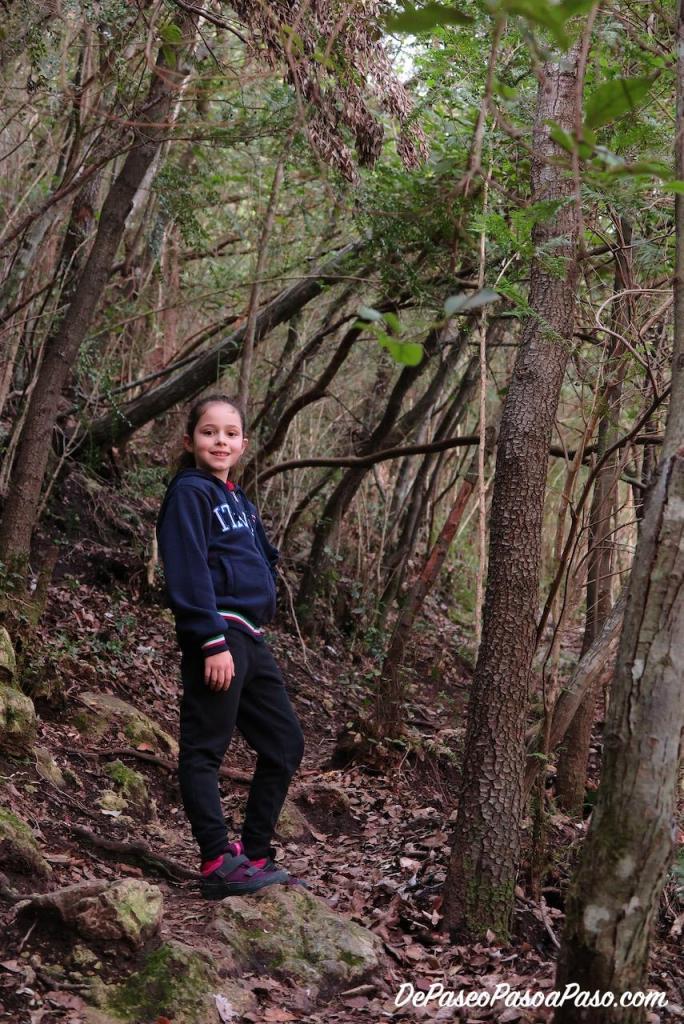 Sendero por dentro del bosque