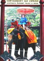 Ann Zadina Hines (SNL '00) at the Ayutthaya Elephant Palace and Krall outside Bangkok, Thailand.