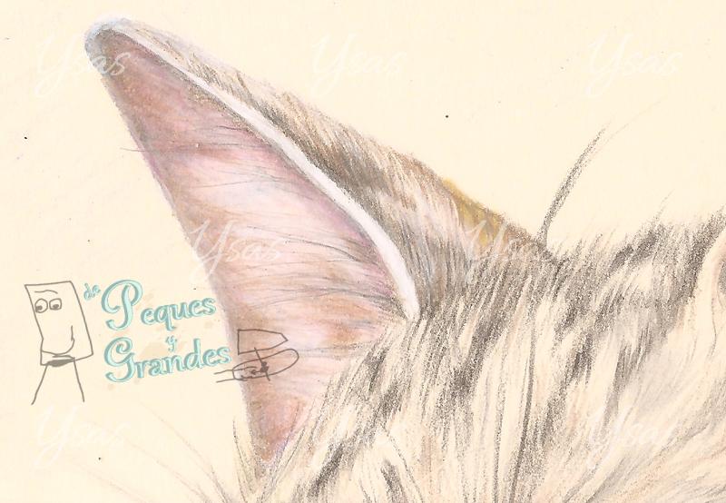 detalle de oreja de dibujo de gato a lápiz de color