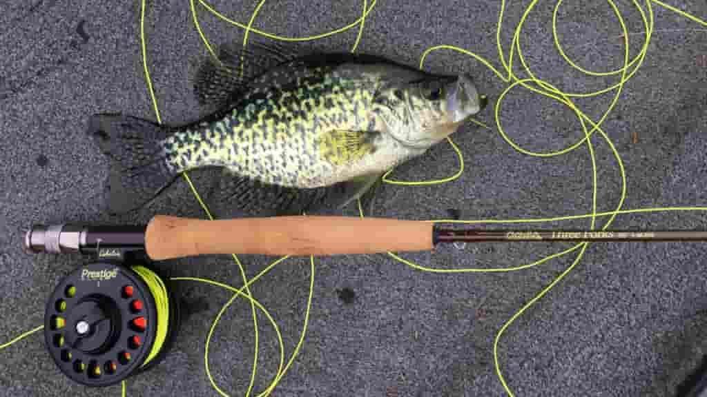 Guía definitiva para principiantes: La caña de pesca a Mosca