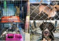 Implementa Centro de Control Canino y Felino de Colima actividades para salvaguardar mascotas