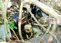 Tecomán: Localizan restos humanos a espaldas de SEMEFO en la colonia Indeco