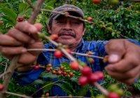 Apoya Agricultura, a través de Producción para el Bienestar, a 219 mil productores de café en 2021