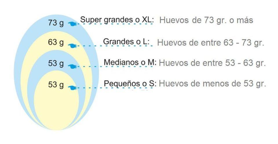 categorías de los huevos según su tamaño