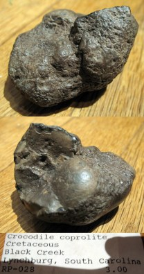 A probable Cretaceous crocodilian coprolite.