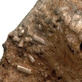 Miocene termite coprolites from California.