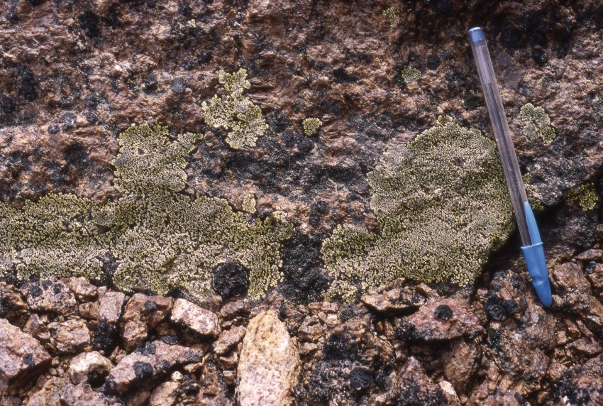2. Lichen