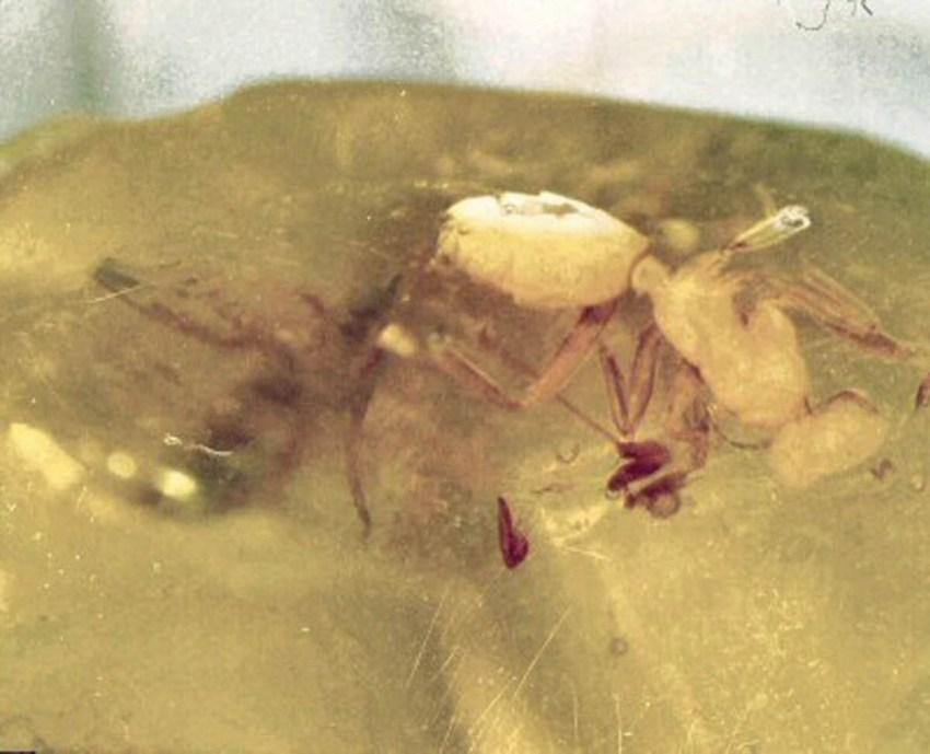 hymenoptera-ant