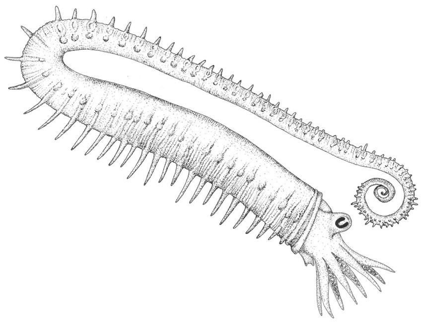 Anisoceras armatum (restored)