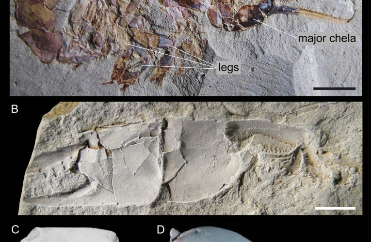 Ghost shrimps: An abundant yet understudied fossil record
