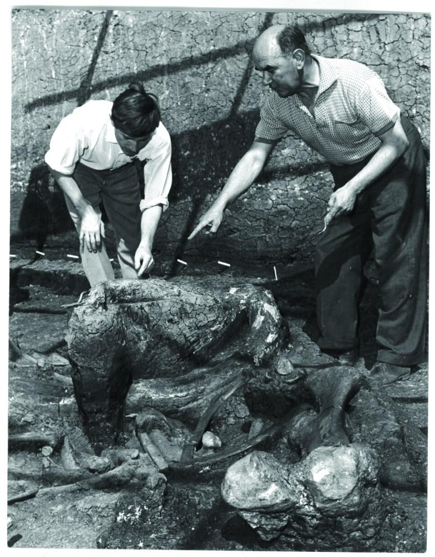Aveley Elephants 1964 005