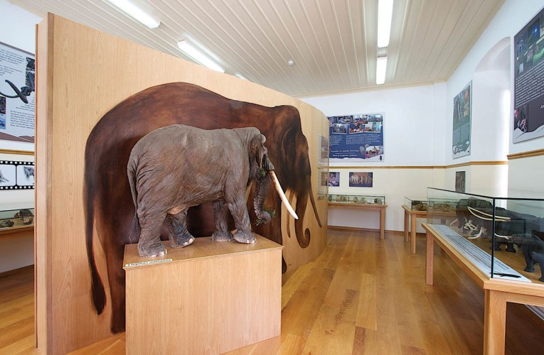New museum in northern Greece: The Siatista Historical Paleontological Collection, the first record of a stegodon in Europe and the making of the straight-tusked elephant