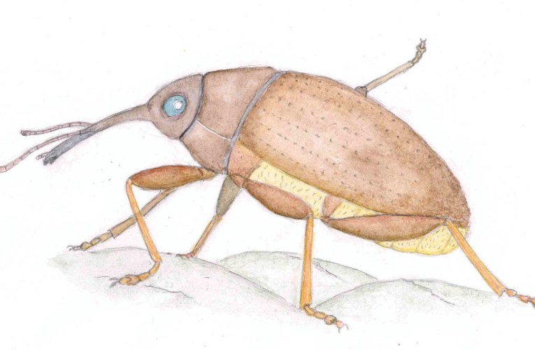 Wealden insects: An artist's update (Part 4)