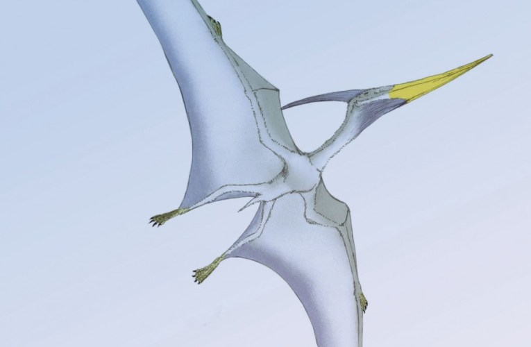 Pterosaurs: A brief flight with these remarkable reptiles