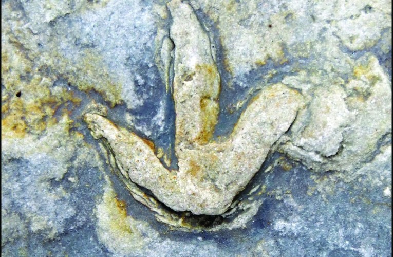 The dinosaur footprints of Whitby: Part 1