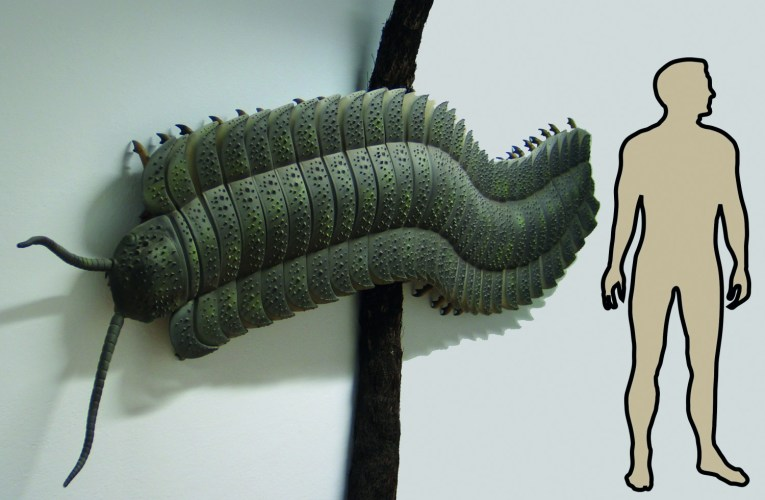 Arthropleura – Germany's 'Fossil of the Year' 2016