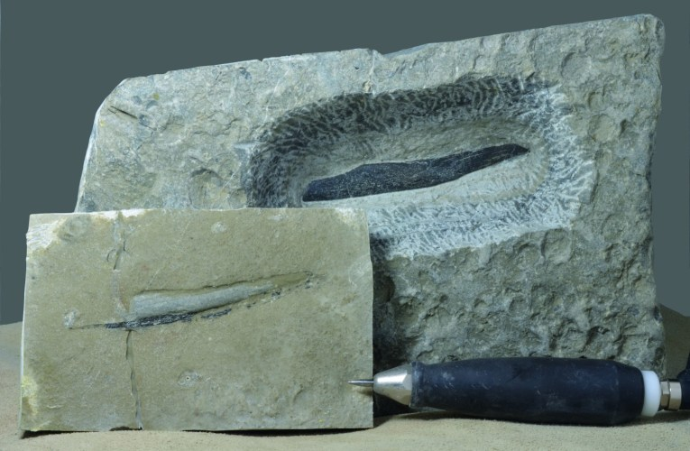 Hard work breaks no bones: A bone from the Wealden facies gets revealed