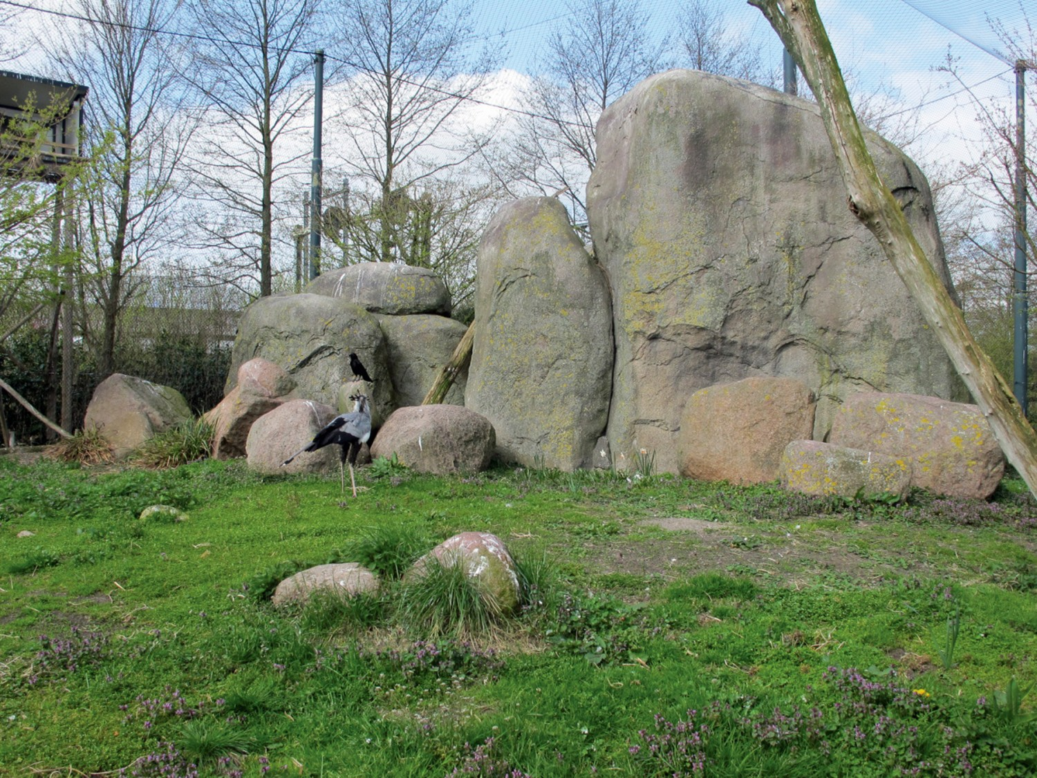 Urban geology: An inselberg in Rotterdam