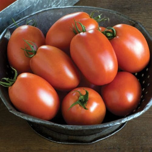plum-regal-f1 tomate determinate Bejo