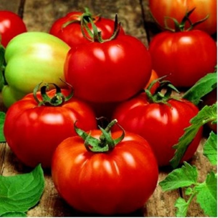rila-f1 tomate nedeterminate Geosemselect