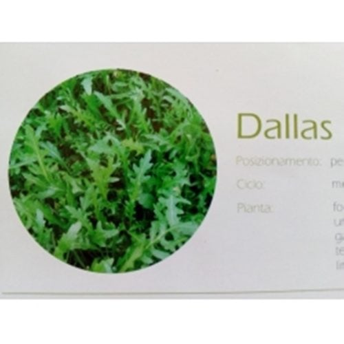 rucola dallas