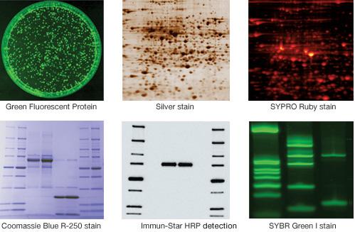 ImageCORE Microscopy Facility  Biorad Chemidoc XRS