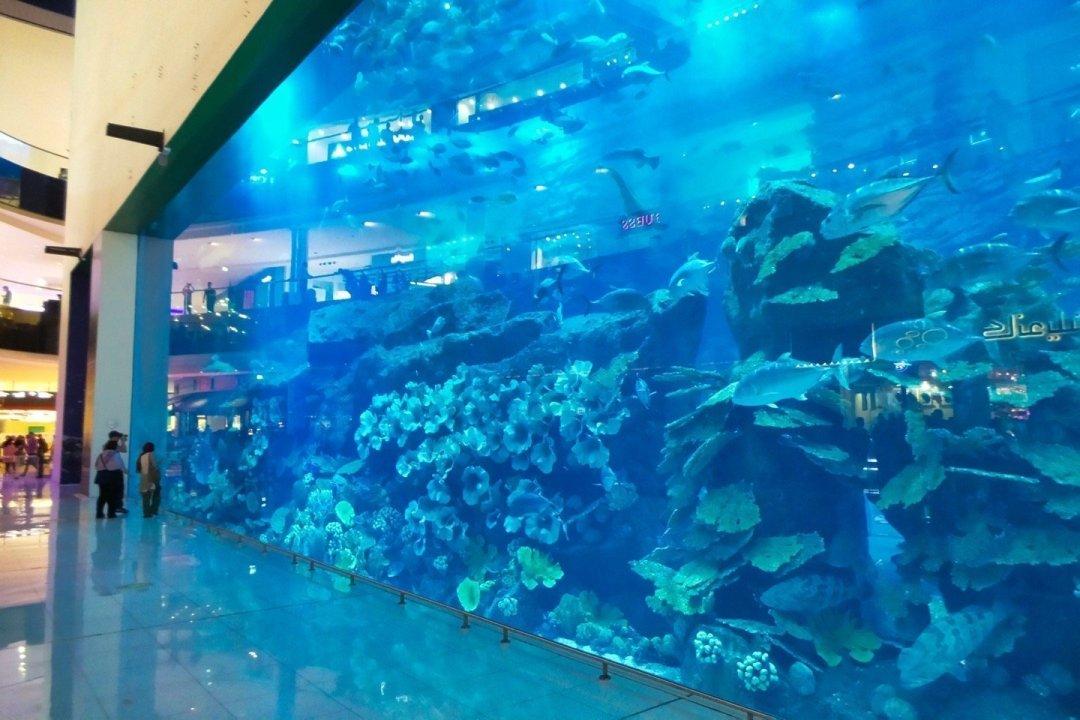 Pared transparente del Dubai Aquarium