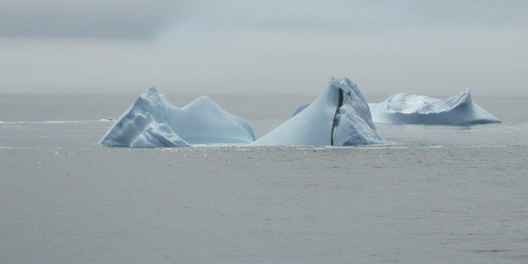 Icebergs entre la niebla