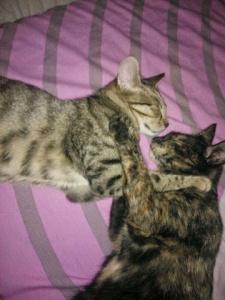 Miau 3